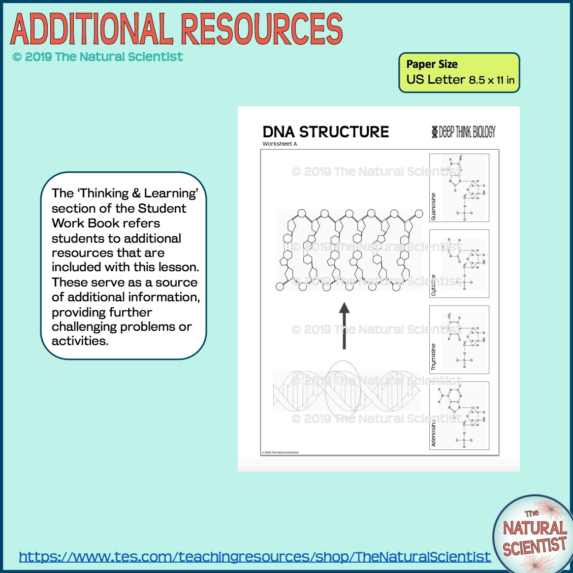 Dna Worksheet Middle School