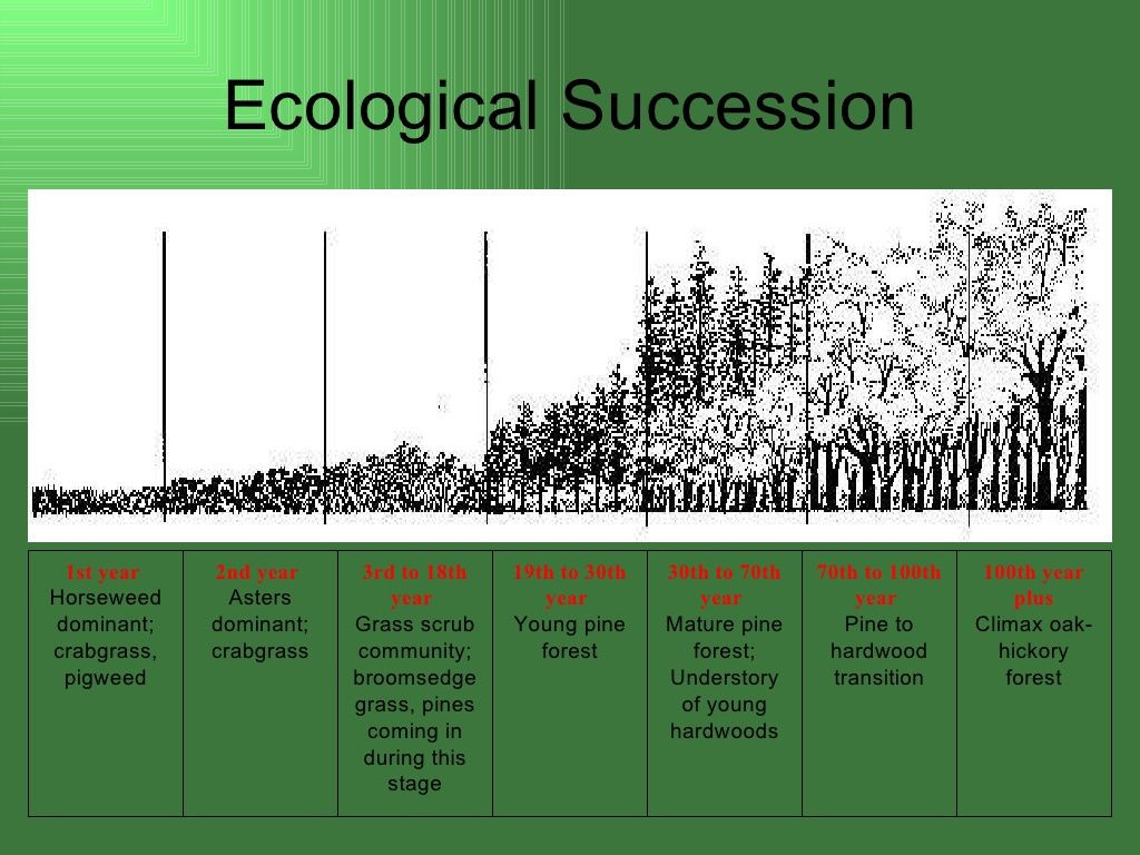 Ecological Succession Worksheet High School