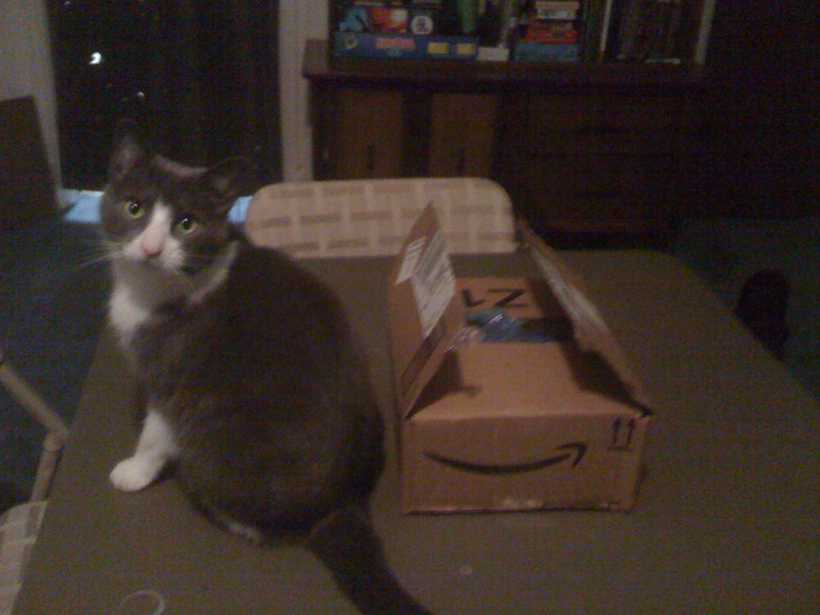 The first box, accompanied by requisite cat.