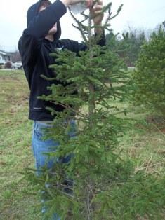 christmas tree 005