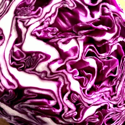 red purple cabbage
