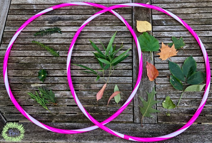 Autumn leaf activity with leaves. Venn Diagram to help sort and classify leaves.