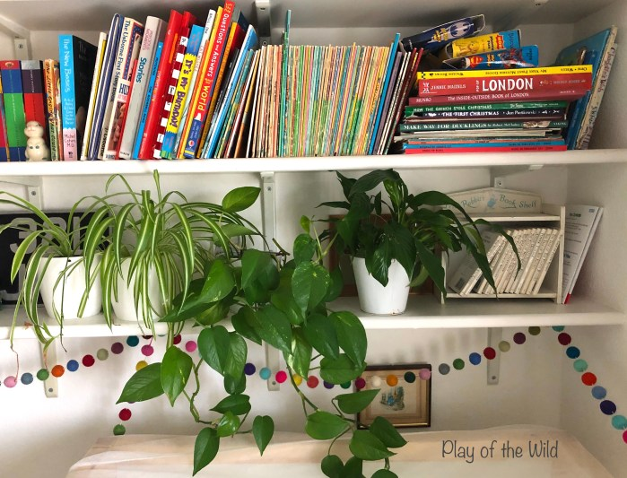 Best Plants for Classroom for air purification and learning. plants improve learning.