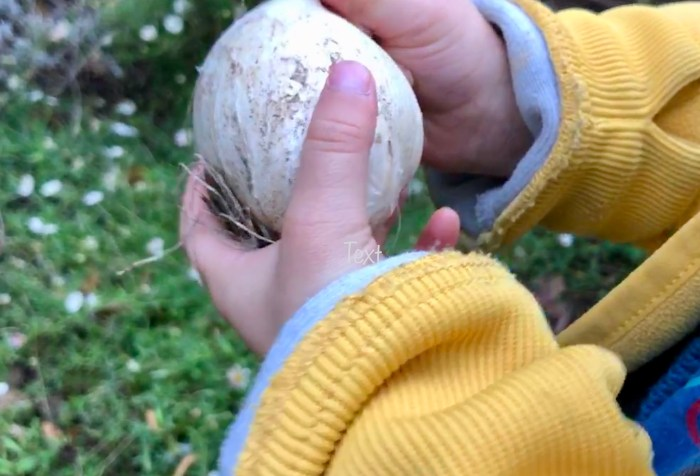 Bulbs for kids. The Best Gardening Bulbs for Kids. Planting bulbs with children.