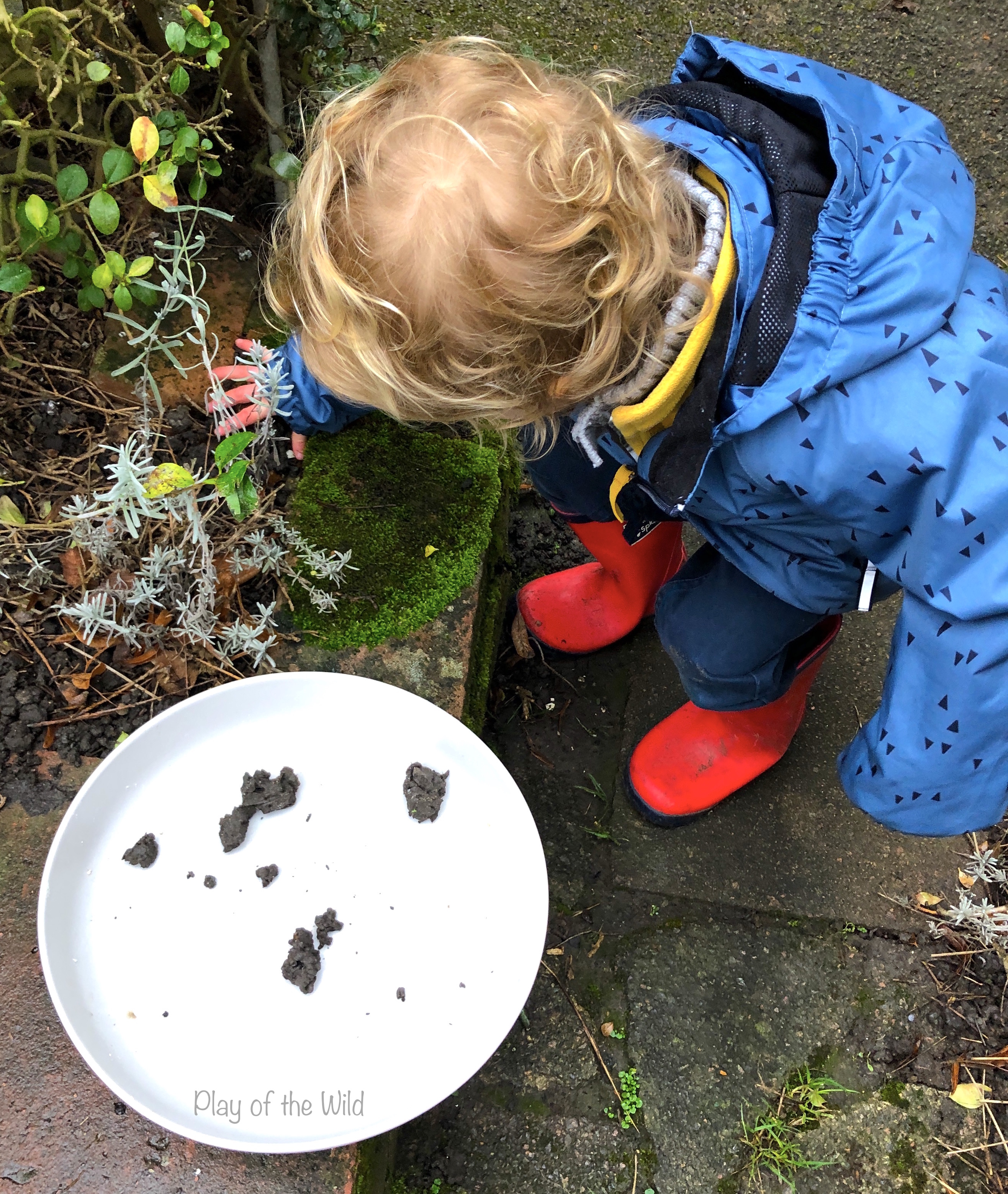 collecting worm castings. Sowing & Spreading Wild Flowers with Seed Bombs