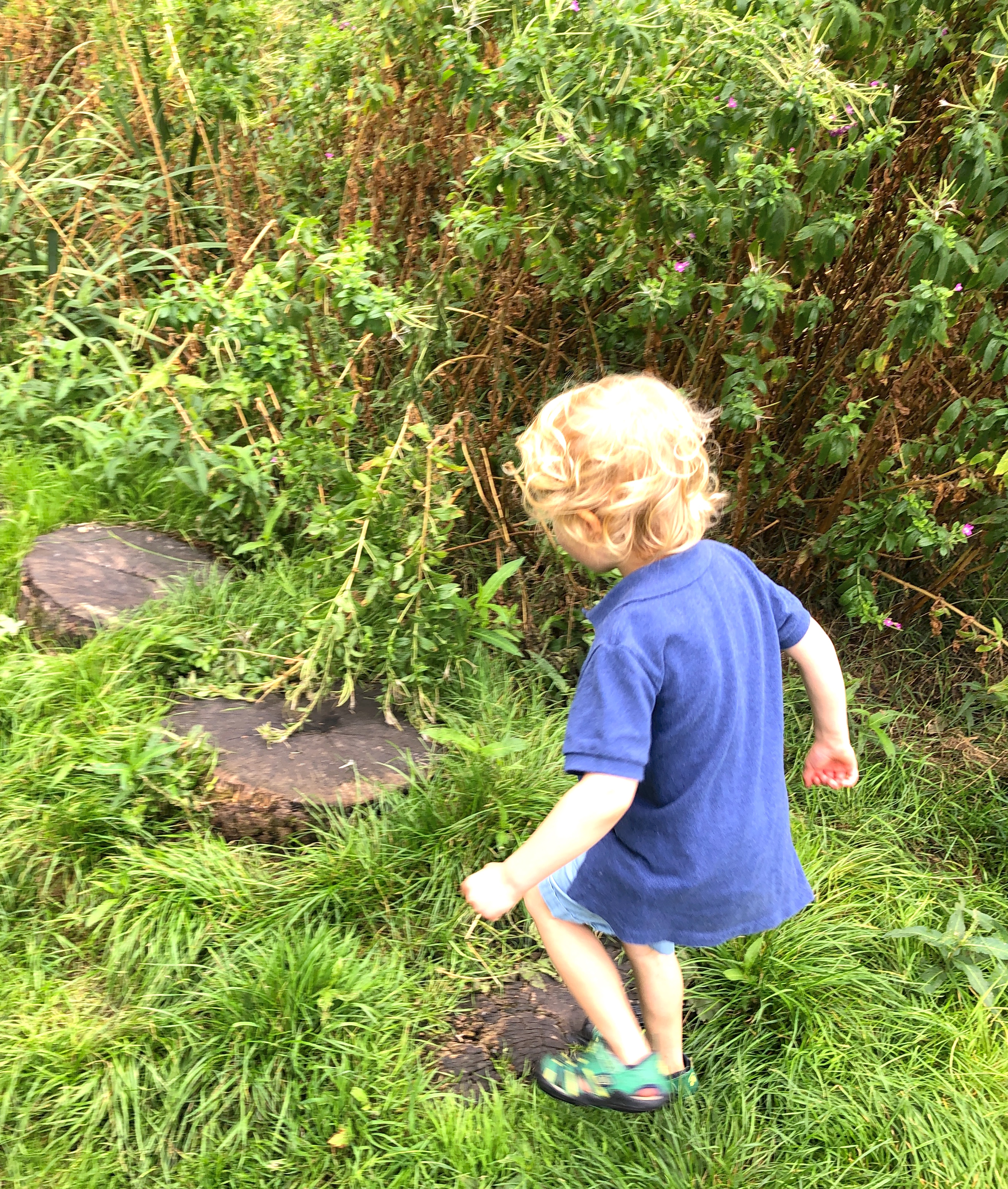 counting steps in eyfs and preschool. nature trails