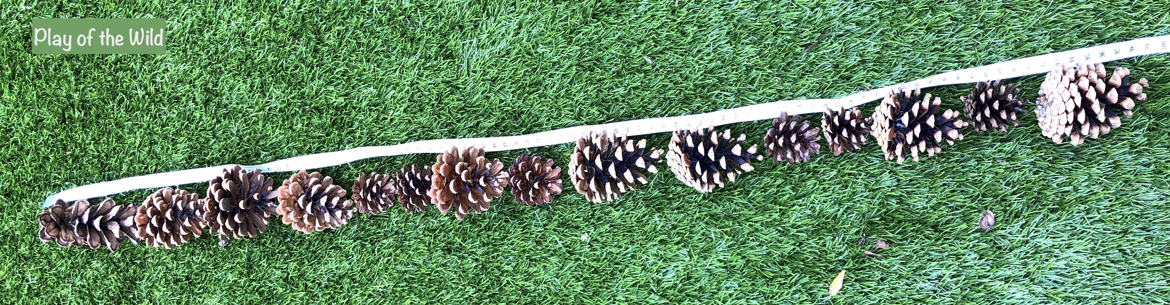 Outdoor Maths Activities KS2 – Teaching Maths Outside. estimating a meter with pine cones.