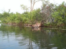 More ducks.