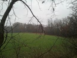 Heavier rain