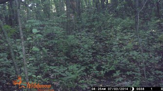 If you look very closely in the upper part of the picture, just left of center, you can see the only fawn we've captured.