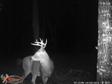 The biggest buck we've ever gotten on camera.