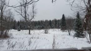The field where I saw deer both nights