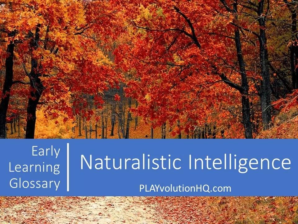 Naturalistic Intelligence