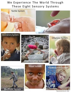 We Experience The World Through These Eight Sensory Systems