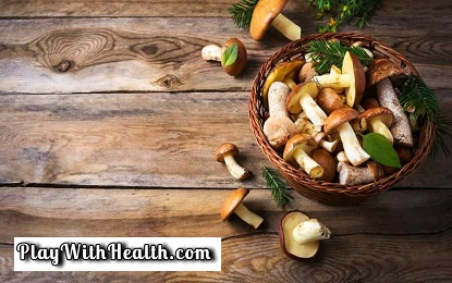 Mushroom is an Anti Alzheimer Super food