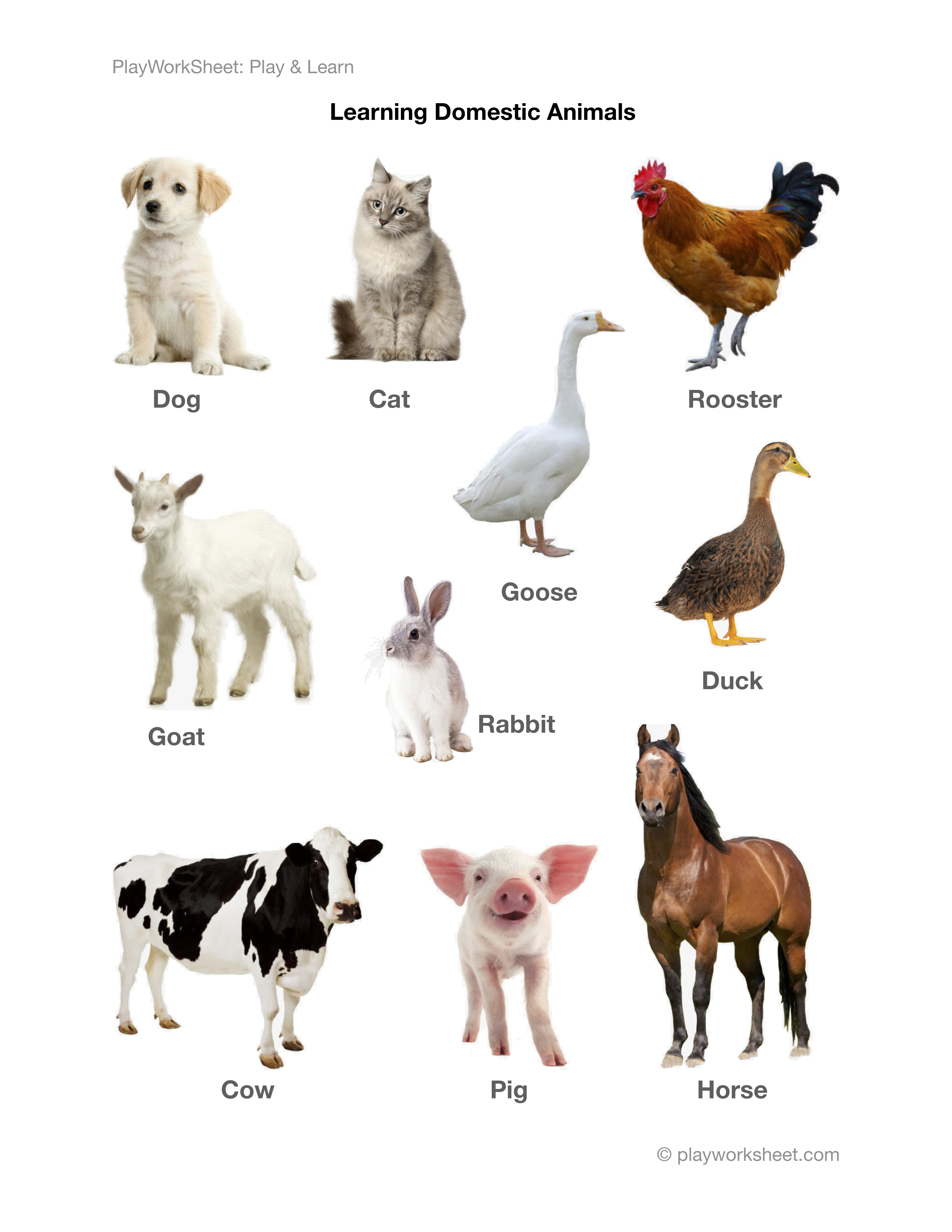 Learning Various Domestic Animals And Pets With Pictures