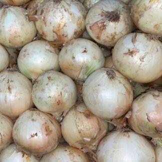 cebolla-cabezona-blanca-lb-paloquemao