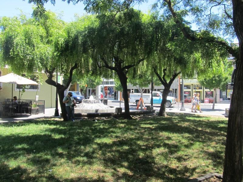 Putnam Plaza trees
