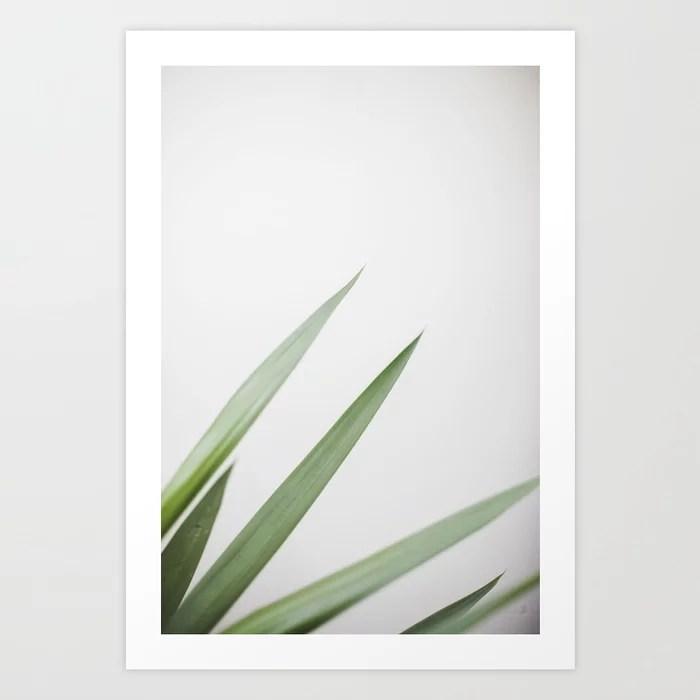 Sunday's Society6 | Photo of a plant, art print