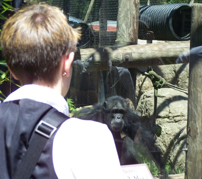 The Google Zoo