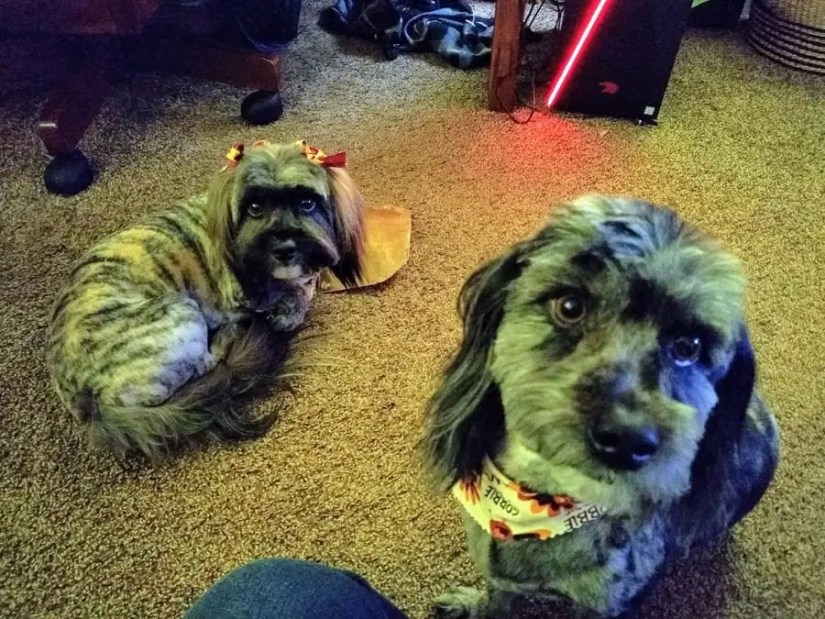 My two dogs, Bella and Morty.