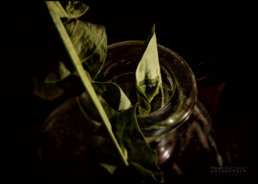 Flower_in_a_bottle_image_VIII