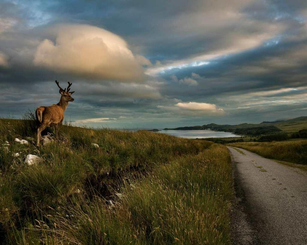 Jura whisky road