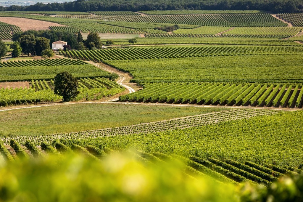 Région Cognac vigne