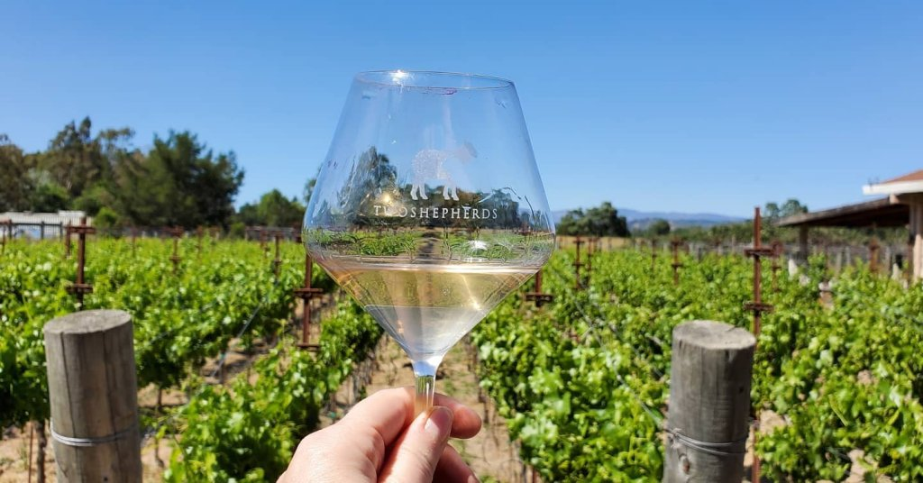 Please The Palate Wine of the Week: Cinsault Two Ways with the Two Shepherds 2020 Cinsault Ancient Vine and 2020 Blanc de Cinsault Ancient Vine from the Bechthold Vineyard in Lodi, California