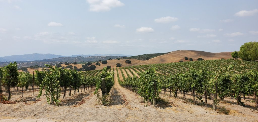Please The Palate Pick of the Week: Visiting Piazza Family Wines' Bella Vista Vineyard in Ballard Canyon in the Santa Ynez Valley
