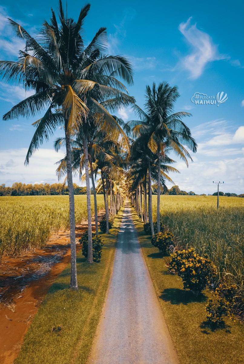 Palmieri in Mauritius