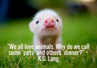 we-all-love-animals