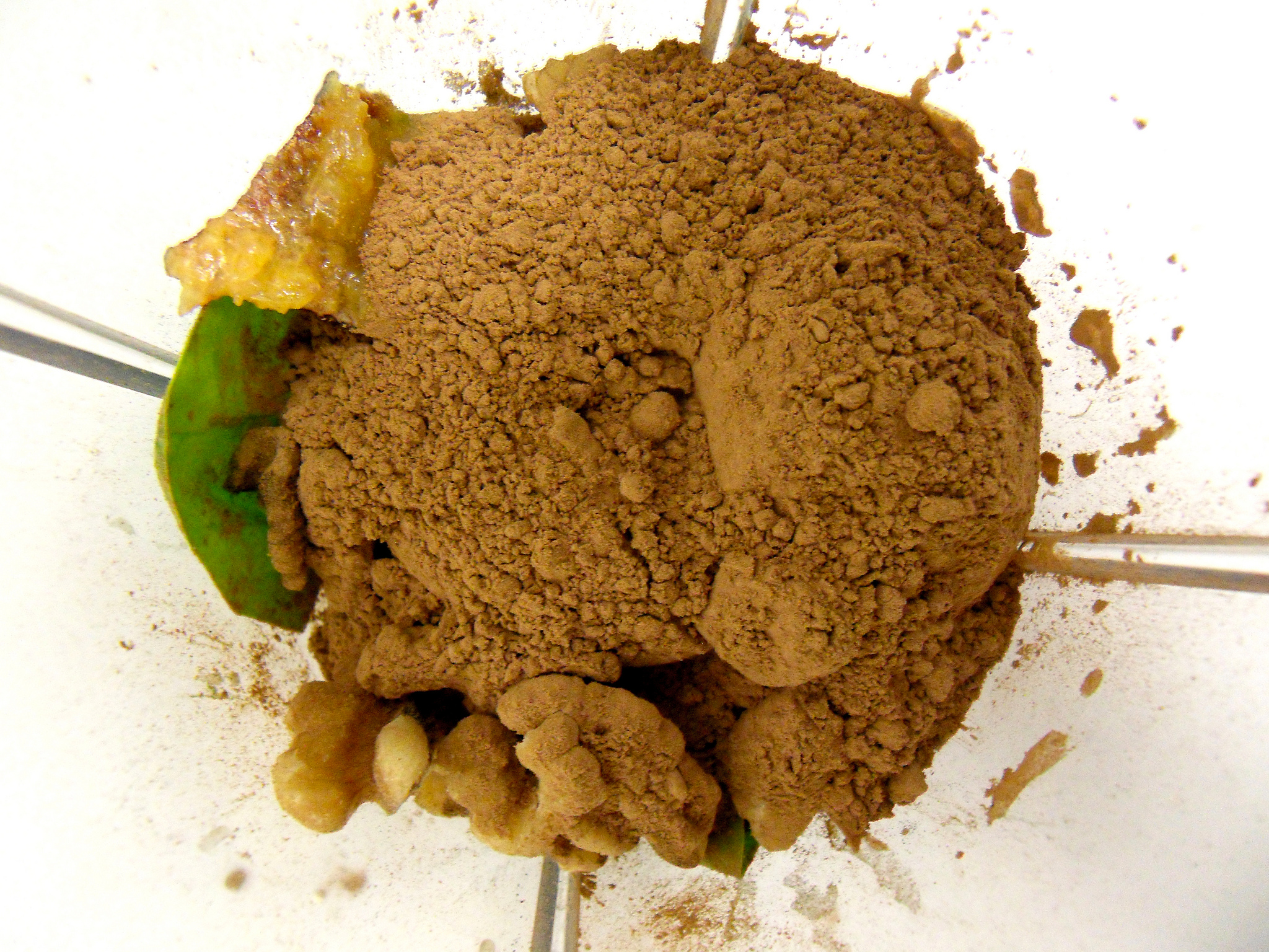 Best Plant Based Protein Powders (and how to know which one is right for you)