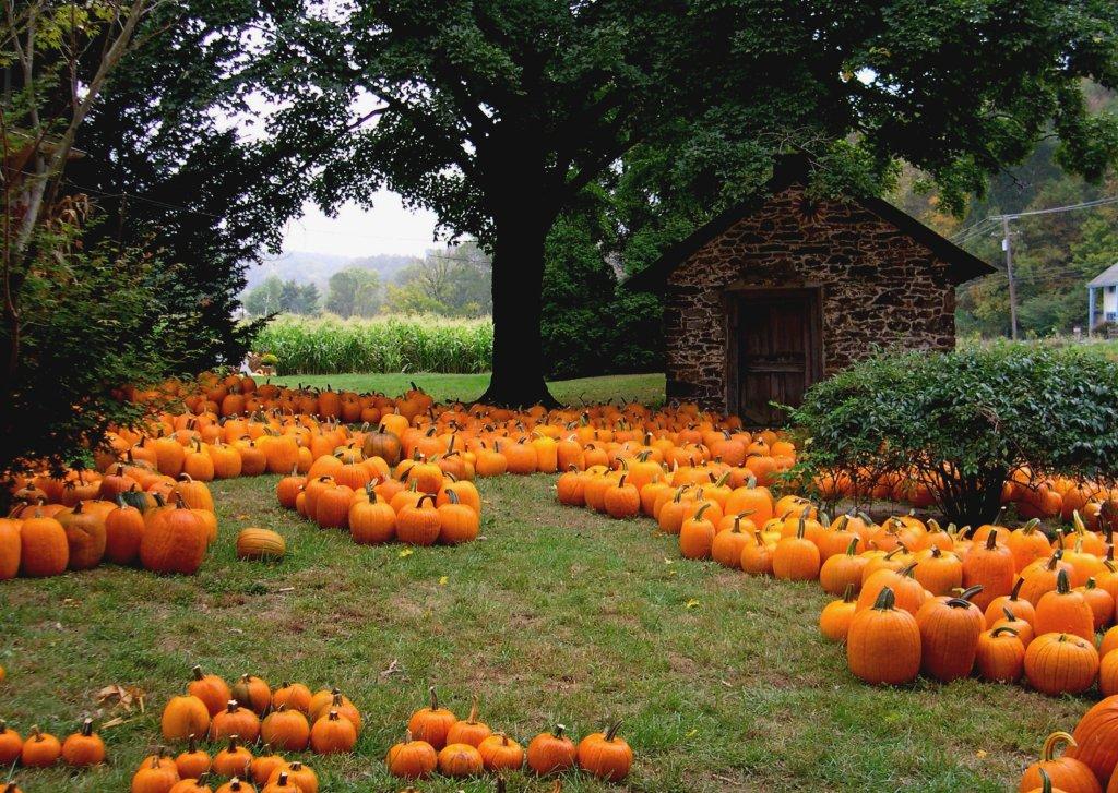 Tryptophan: Pumpkin