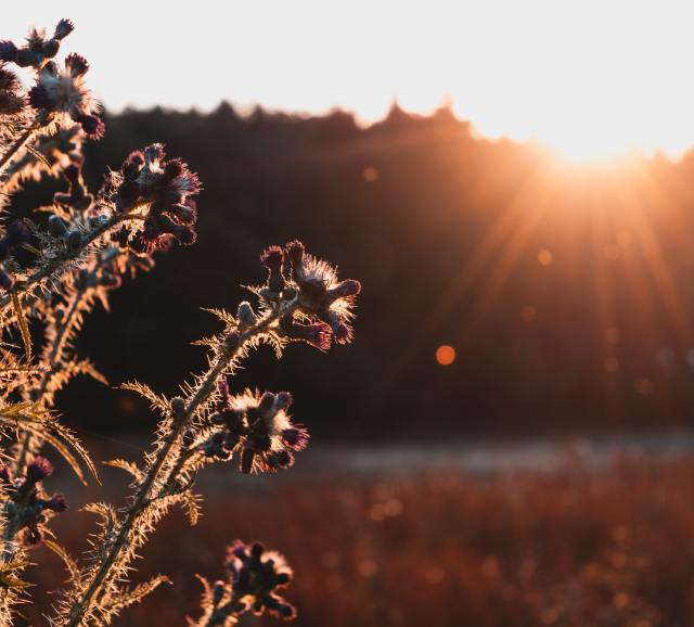 Thorns and thistles are weeds that cost farmers a lot of work, sweat and money