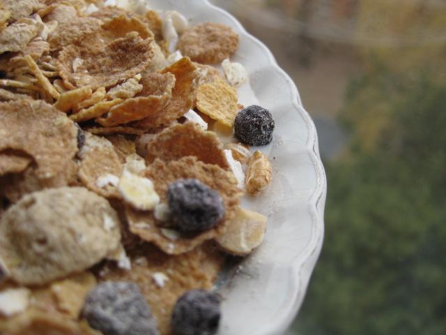 2009_03_22_breakfast