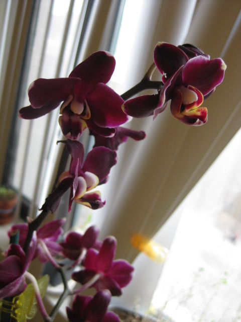 2009_03_28_orchid1