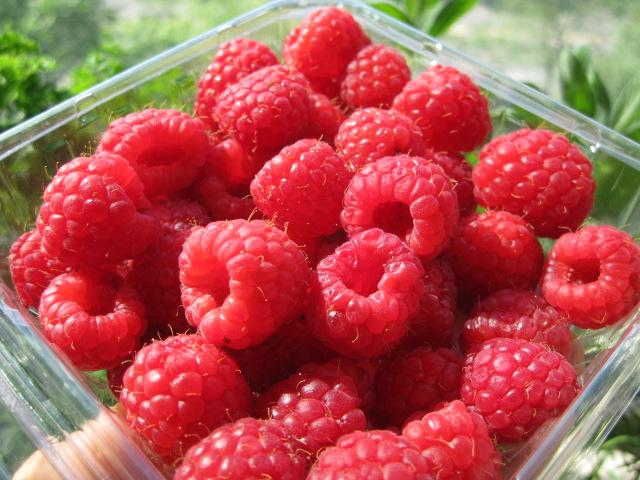 2009_07_04_raspberries