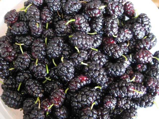 2009_07_05_mulberries