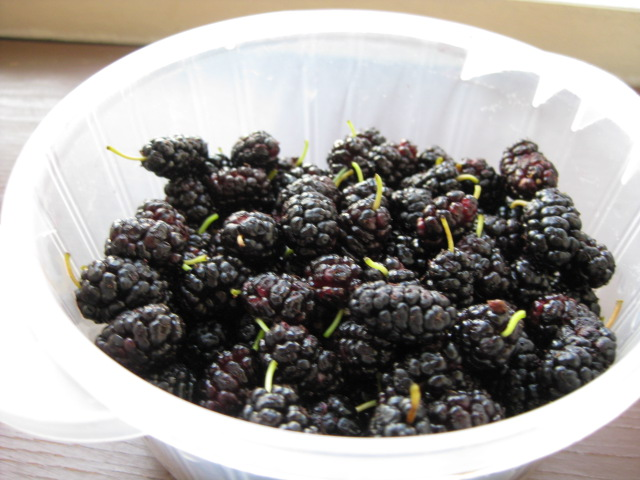 2009_07_08_mulberries