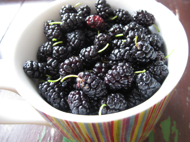 2009_07_11_mulberries