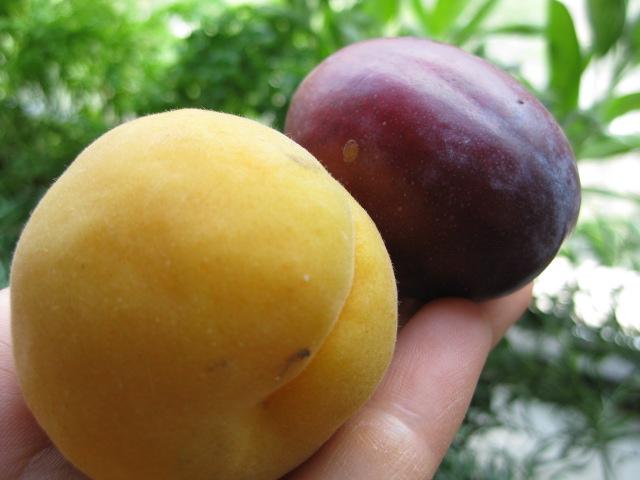 2009_07_18_fruit