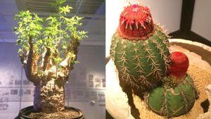 ウルトラ植物博覧会とシャネルのショーウインドウが魅せた植物の魅力