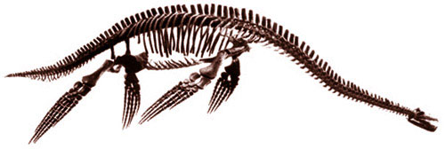 Plesiopterys skeleton