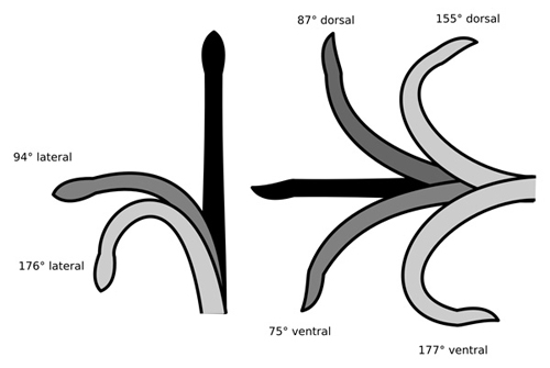 Elasmosaurid neck flexibility