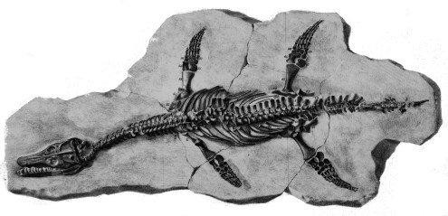 Skeleton of Archaeonectrus. Lithograph from Owen (1865).