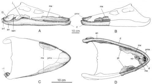 Skull of Aristonectes in various aspects. From Gasparini et al. (2003).