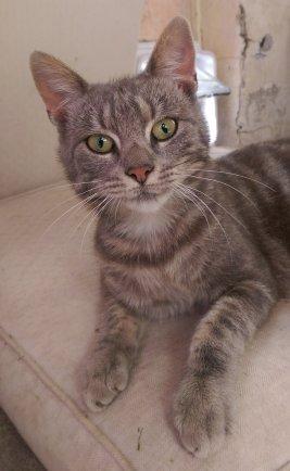 Unsere Katze Villana vor einer Katzenklappe