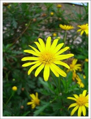 yellow flower by the roadside © pling