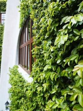 ghibli museum garden wall